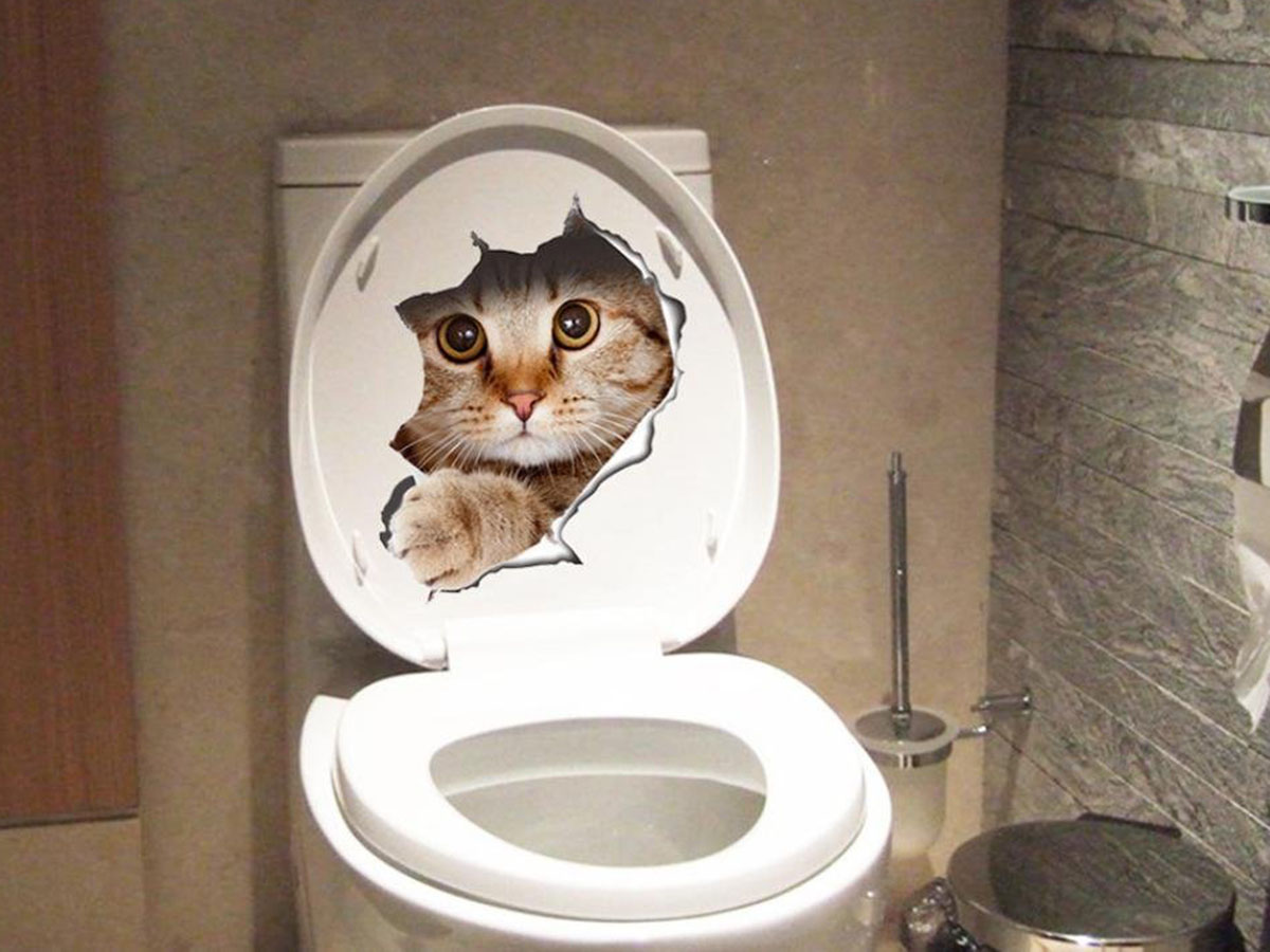 This cat sticker for your toilet 🐱🚽